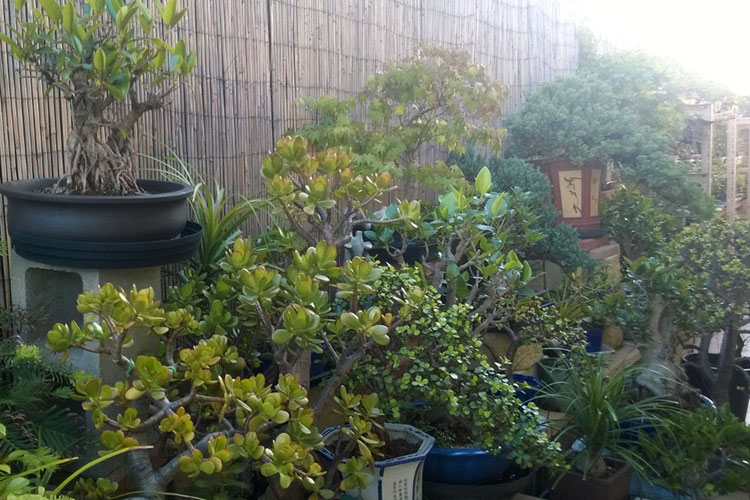 Western Sydney Bonsai Nursery